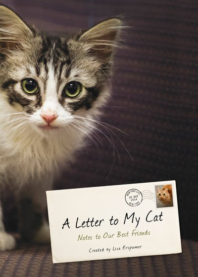 A Letter to My Cat