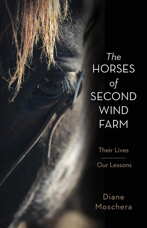 The Horses Of Second Wind Farm by Diane Moschera
